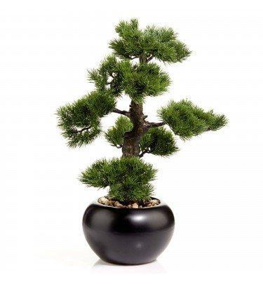 Bonsai Kiefer, 48 cm