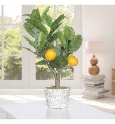 Zitronenbonsai, 40 cm