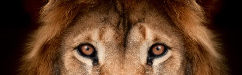 """Deals aus """"Die Höhle der Löwen"""""""
