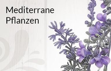 Belles Fleurs mediterrane Pflanzen
