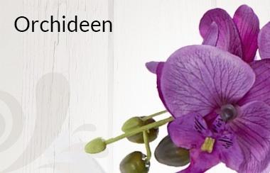 Belles Fleurs Orchideen