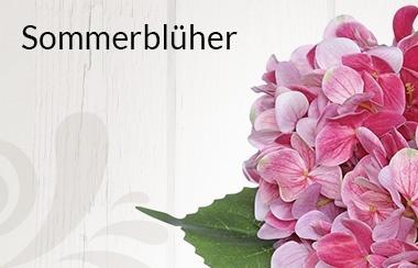 Belles Fleurs Sommerblüher